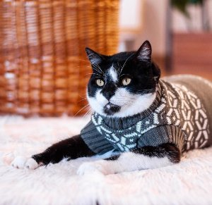 Tricot para Cachorros e Gatos Suéter Chantilly