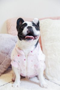 Casaco Pelúcia para Cachorros e Gatos Poá Rosa