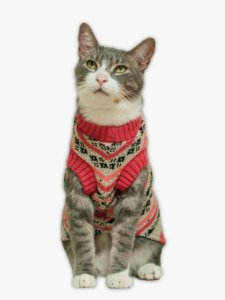 Suéter de Tricot Retrô Framboesa para Cachorros e Gatos