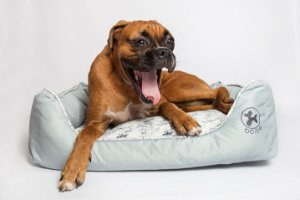 Cama Retangular para Cachorros | Marble Grey