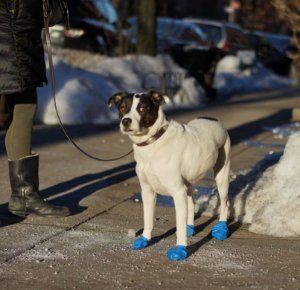 Pawz Boots Botas para Cachorros | Medium | Médio