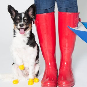 Pawz Boots Botas para Cachorros | XX-Small |  XX-Pequeno