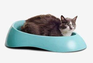 Caixa de Areia para Gatos Verde