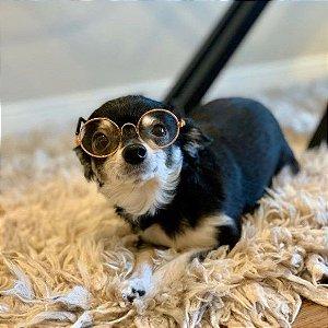 Óculos Transpartente para Cachorros de Pequeno Porte