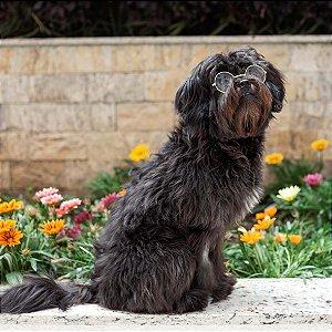 Óculos Transpartente para Cachorro Médio e Grande Porte