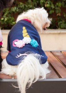 Blusa para Cachorros e Gatos | Unicórnio Azul