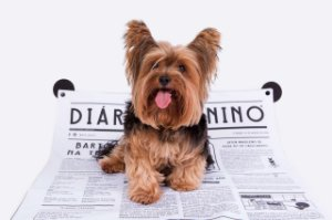 Tapete Higiênico Lavável para Cachorros Meu Bartô Diário Canino