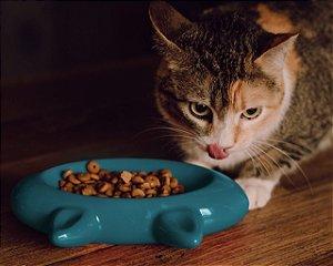 Comedouro para Gatos Cerâmica Cat Turquesa