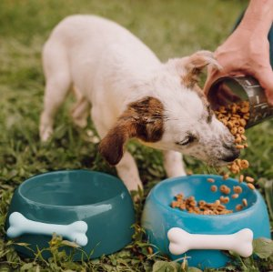 Comedouro para Cachorros | Cerâmica Turquesa com Osso
