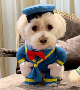 Fantasia para Cachorros | Pato Donald | Carnaval