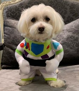 Fantasia para Cachorros | Buzz Lightyear Toy Story