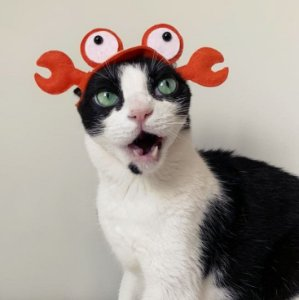 Fantasia para Cachorros e Gatos | Touca Caranguejo