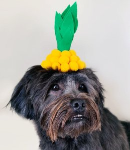 Fantasia para Cachorros e Gatos Tiara Abacaxi