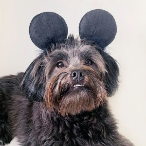 Fantasia para Cachorros e Gatos Tiara Orelhas Ratinho