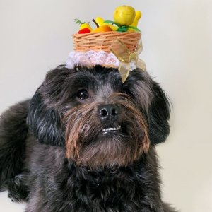 Fantasia para Cachorros e Gatos | Tiara Cesta de Frutas | Carnaval
