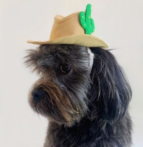 Fantasia para Cachorros e Gatos Chapéu Cowboy com Cacto