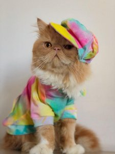 Camiseta Pet | Tie Dye Amarela