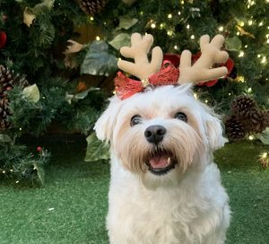 Fantasias Natal para Cachorros e Gatos Rena