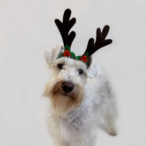 Fantasia de Natal para Cachorros e Gatos Chifres de Rena com Detalhes