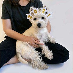 Fantasia Réveillon para Cachorros e Gatos 2021 com Estrelas