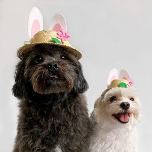 Fantasia de Páscoa Chapéu com Orelhas de Coelho e Flores para Cachorros e Gatos