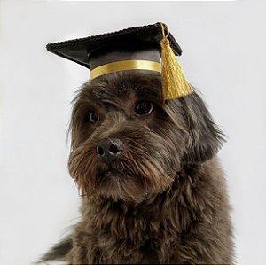 Fantasia Capelo Chapéu de Formatura para Cachorros e Gatos