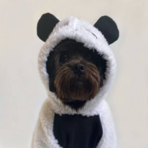 Moletom para Cachorros Urso Panda