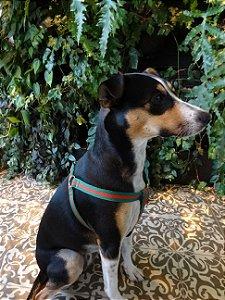 Conjunto guia + peitoral Gold para cães