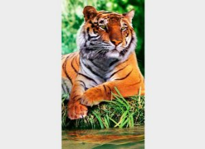Toalha de Praia Estampada Tigre Tiger Resting - Dohler