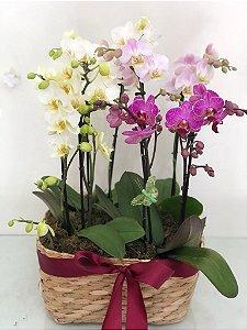 Coquetel de Mini Orquídeas