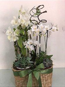 Elegância de Orquídea