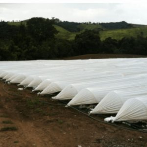Túnel Leitoso Nortene 1,80X500 68,7 KG Ref 150 Com anti UV