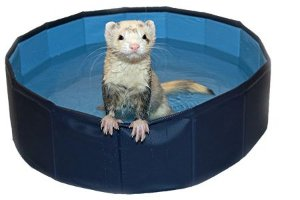 Ferret Swimming Pool Marshall