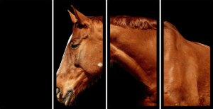 Quadro Mosaico 4 Partes Reto Cavalo Art e Cia Preto