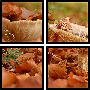 Quadro Mosaico 4 Partes Quadrado Cogumelos No Outono Art e Cia Preto