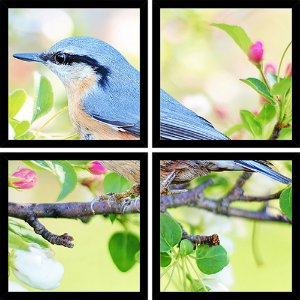 Quadro Mosaico 4 Partes Quadrado Blue Bird Art e Cia Preto