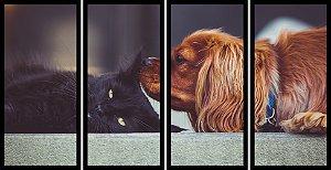 Quadro Mosaico 4 Partes Reto Gato e Cachorro Art E Cia Preto