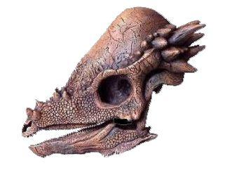 Crânio de Pachycephalosaurus (escala reduzida 1:4)