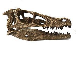 Crânio de Velociraptor