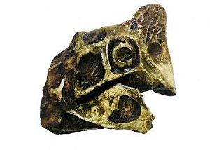 Crânio de Oviraptor
