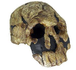 Crânio de Homo rudolfensis