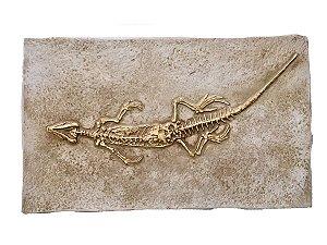 Fóssil de rincocéfalo