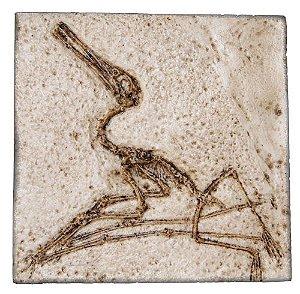 Fóssil de Pterodactylus elegans - Ctenochasma elegans
