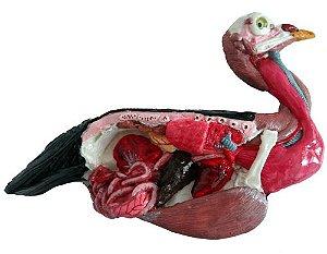 Anatomia básica ave