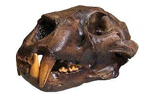Crânio de Onça Pintada modelo 2