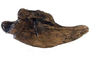 Garra de Preguiça Gigante (Megalonyx jeffersonii)
