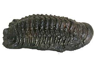 Réplica de trilotita (Crotalocephalina globifrons)