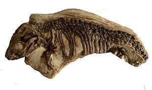 Réplica de fóssil de Thrinaxodon