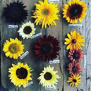 Floricultura Bernadete