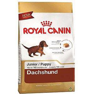 Ração Royal Canin Mini para Cães Filhotes da Raça Dachshund